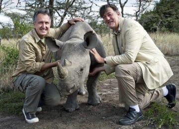 Return of the White Rhino